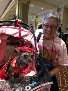 Coco the Couture Cat at BlogPaws Conference