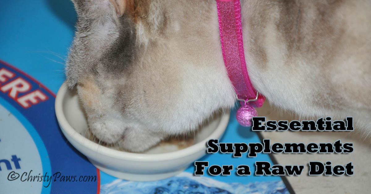 6 + 1 Essential Raw Diet Supplements for Cats