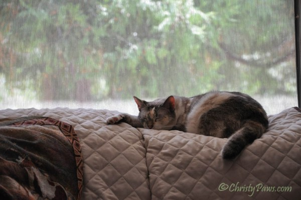 Caturday Art: Dreaming of Traveling with Izzy and Tristy - original photo