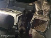 Where do Evacuated Kitties Stay?
