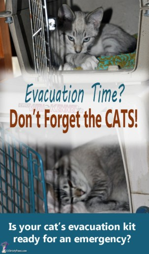Cats-in-crates - 5 Things to do Before Disaster Strikes -- Cat Disaster Preparedness