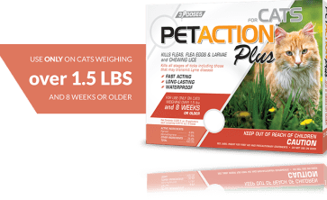 prevention is the best way to avoid a flea infestation