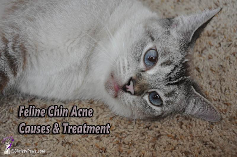 Feline Chin Acne