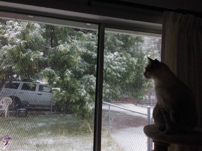 Ocean watching the snow fall