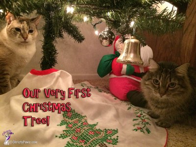 Me, Christy, and Echo under the Christmas tree