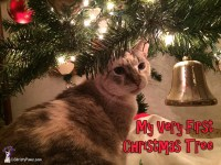 Me, Christy, sitting under my very first Christmas tree