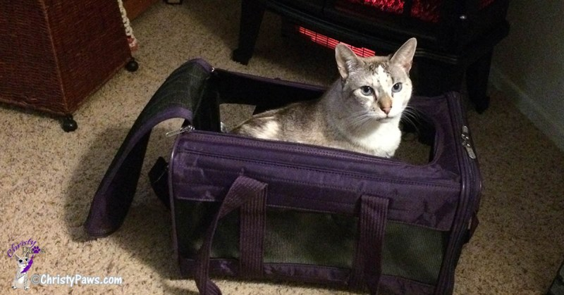 Christy in her carrier prepping for - My First Car Ride in Over a Year