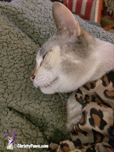 Christy sleeping in leopard harness prepping for- My First Car Ride in Over a Year