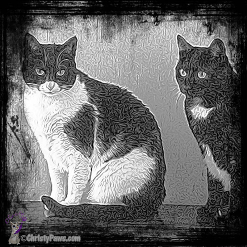 SuperPhoto Zoey and Sheba Black Aura