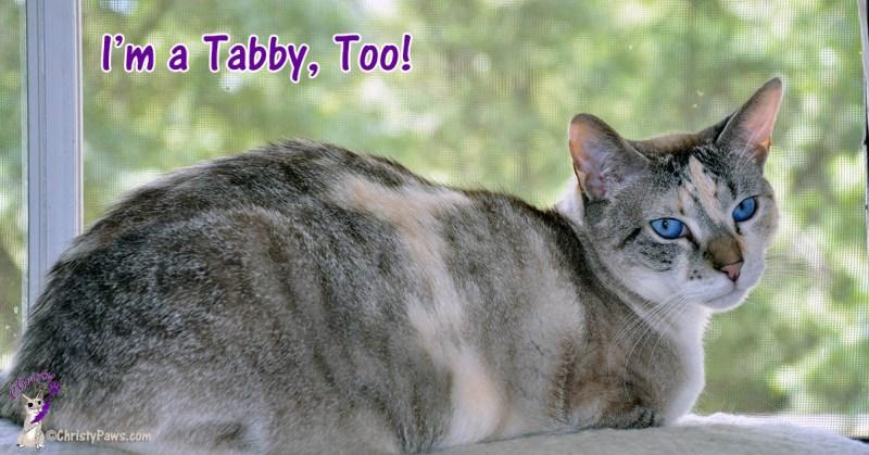 Christy and faint tabby M I'm a Tabby Too