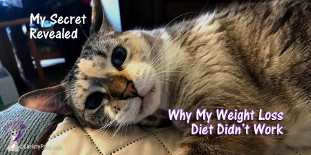 Did you know that the secret to weight loss for kitties is the same as for humans? Read on to find out why my cat diet for weight loss didn't work.