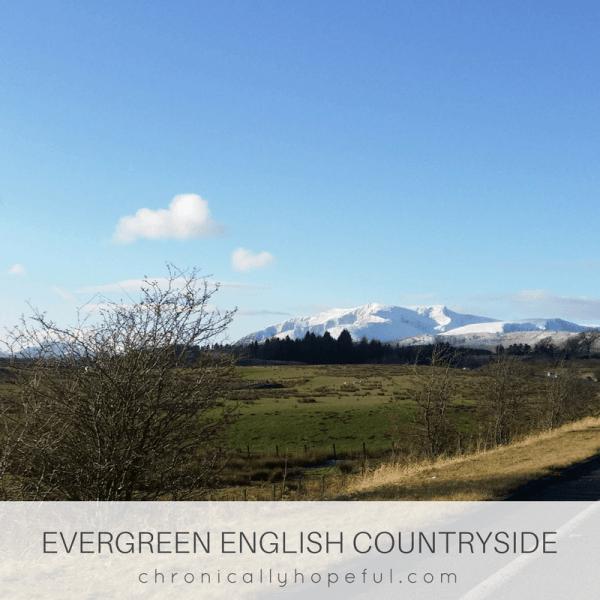 Evergreen countryside