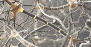 Is Multiple Sclerosis Genetically Inherited