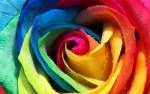 Dancing Through Rainbows