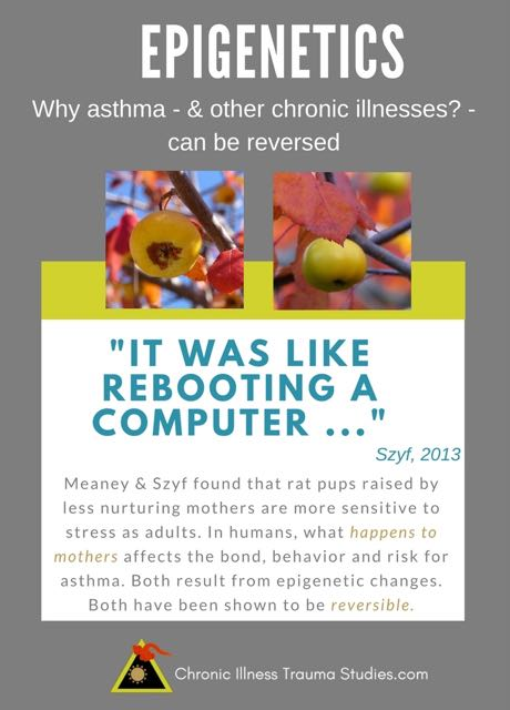 "Mothers behaviors and bonding are affected by events during pregnancy and birth that are not their fault. This can affect their child's risk for chronic illness. Risk for chronic illness links to events in early life. Moshe Szyf in a 2013 article in Discover on his and Michael Meaney's finding that epigenetic effects that generally last a lifetime - can also be reversed. ""It was like rebooting a computer!"""