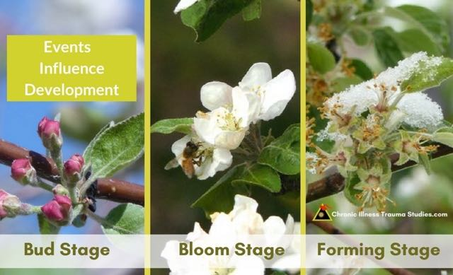 Plants such as apples are affected by weather, temperature, and other environmental factors and are especially sensitive during early development such as stages of budding, blooming and early formation.