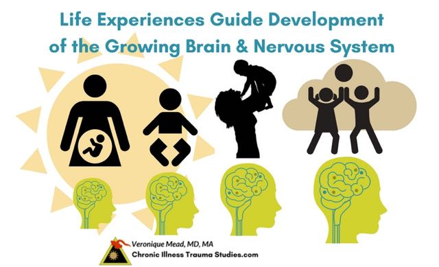 Life experiences guide development of the growing brain and nervous system to interact with genes and affect risk for chronic illness. #autoimmune #chronicillness #me/cfs #ra #rd #ms #ibd #fibromyalgia #parkinson's #alzheimer's #IBD Chronic Illness Trauma Studies (CITS) _Mead