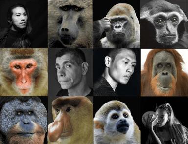 """Primates image from """"Primates   At the Origin"""""""