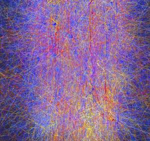 simulation de 10.000 neurones virtuels de rat connectés entre eux par 30 millions d'interconnections.