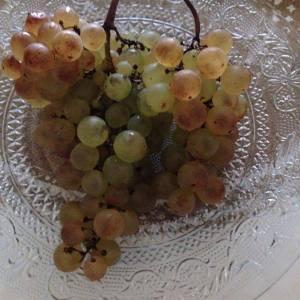 raisin-cure