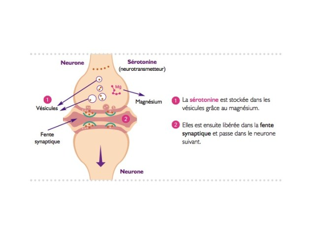 Synapse et rôle du magnésium