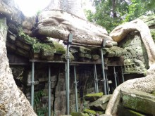 Nature supported, Ta Phrom