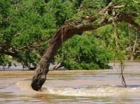Verdronken bomen 2