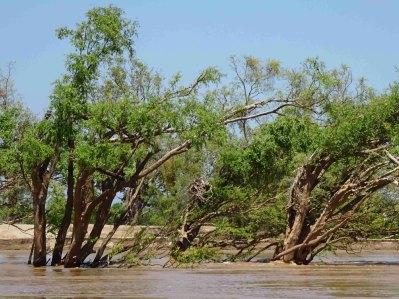 Verdronken bomen 3