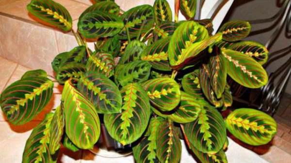 Декоративно лиственные растения | Что посадить?