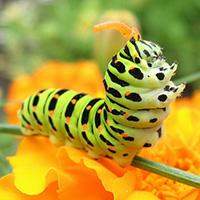 Стихи про гусеницу — Стихи, картинки и любовь…