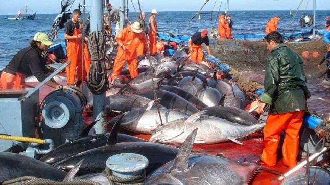 """مسلسل """"اتفاقية الصيد البحري"""" لا يزال مستمرا.. و لجنة المصايد البحرية ببرلمان الإتحاد الأوروبي تلتقي أطراف نزاع الصحراء"""