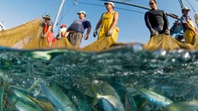 إعفاءات وتنقيلات واسعة تطال مناصب في قطاع الصيد البحري بالصحراء!