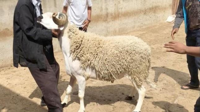 الداخلية تفرض تراخيص للجزارين وتدابير صحية لعملية ذبح أضاحي العيد