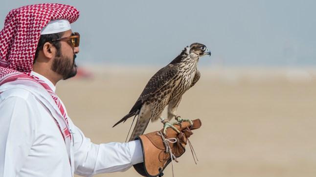 شقيق أمير قطر يحل ببوجدور لقضاء عطلة رأس السنة!