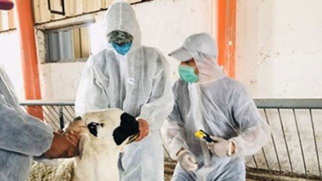 وزارة الفلاحة تطلق عملية ترقيم 8 ملايين رأس من الأغنام والماعز المعدة لعيد الأضحى
