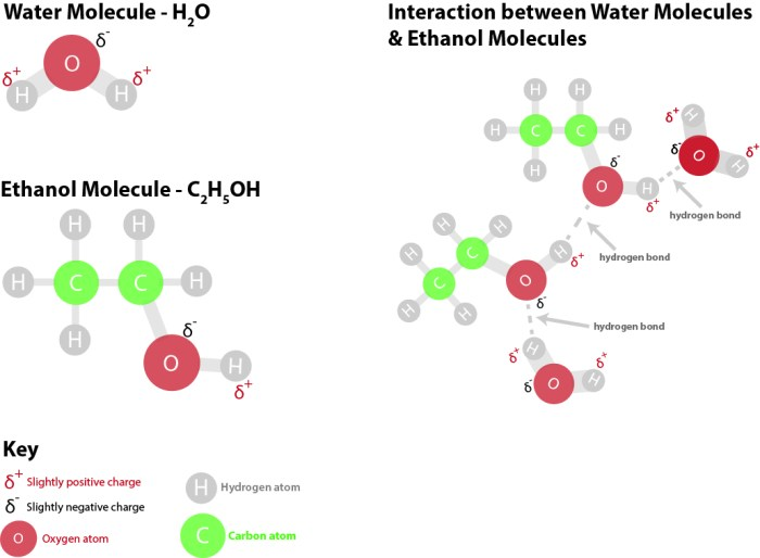 Since both water and ethanol are polar molecules, they mix well with each other. The Hydroxyl (O-H) group on the ethanol molecule forms hydrogen bonds with the oxygen and hydrogen atoms that form each water molecule.