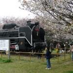 桜の木の下のD51(一里山公園)