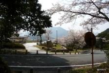 桜の鳴滝公園