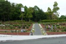 江汐公園のバラ園