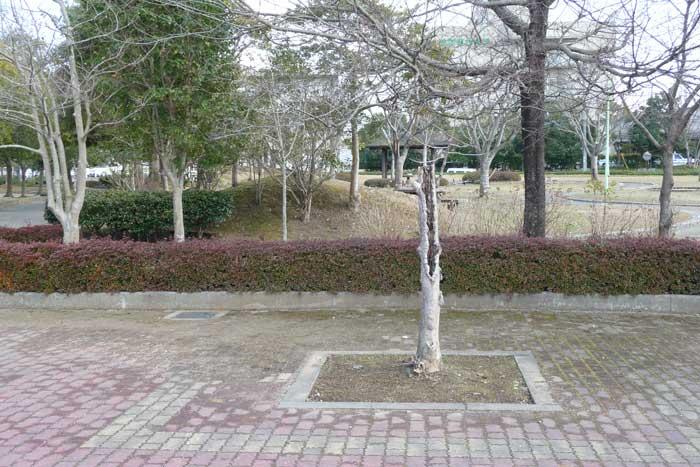 美祢中央公園