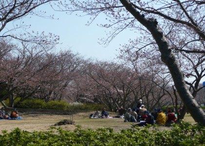 花より団子、大宴会してました。戦場ヶ原公園。