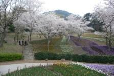 桜はらはら火の山トルコチューリップ園