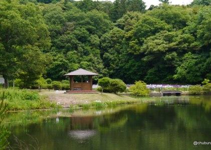 菖蒲の季節が来たぞ!。物見山総合公園菖蒲園。