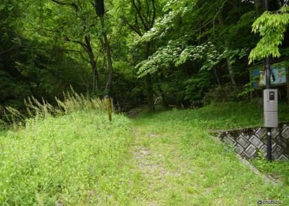 若葉のころ その2新緑であふれていた瀬戸の滝遊歩道