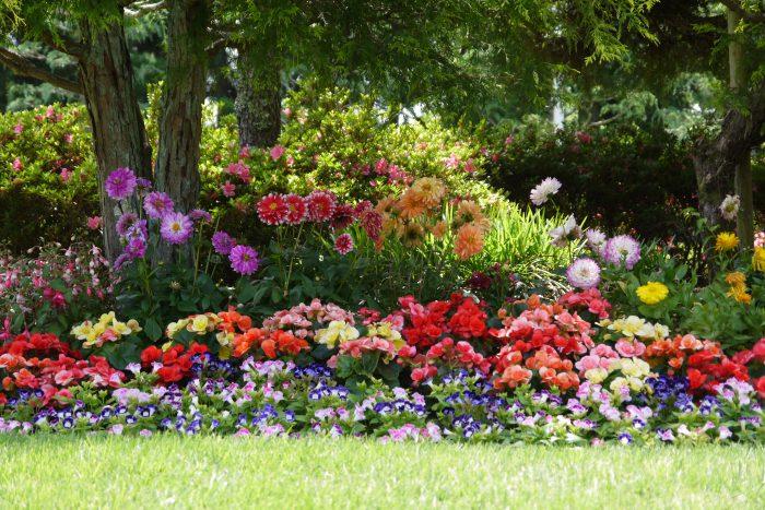 薔薇の花を見に湧永満之記念庭園に行ってきました。