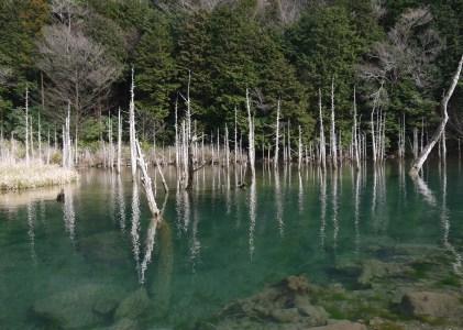 下関の絶景の地一の俣桜公園に行ってきた。