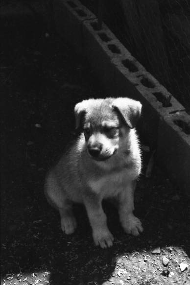 Adorable cachorro (Jorge Mendoza).