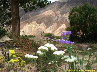 http://inta.gob.ar/noticias/situacion-actual-y-perspectivas-de-la-floricultura-en-el-noa