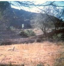 Llama en la Posta de Hornillos (1984, veromendo)