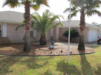 Front Yard Palm Garden